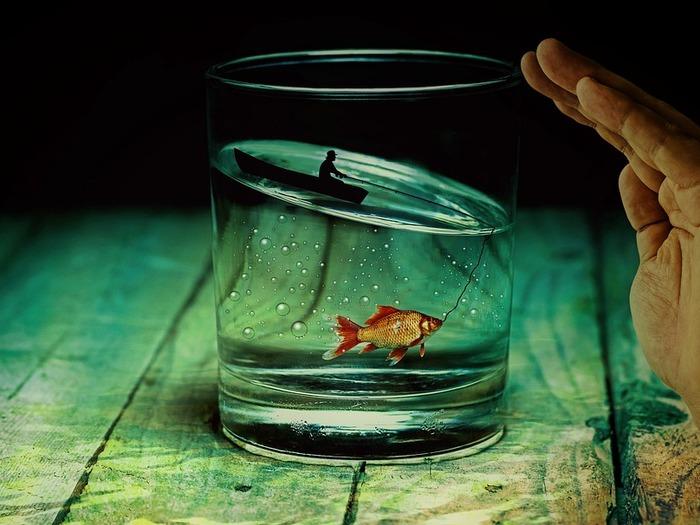 Видеть рыбу во сне предвещает скорую беременность